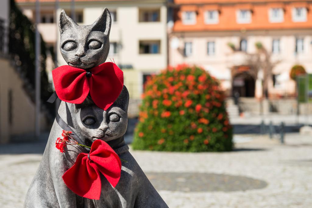 Kociogórek i Lubuszka - rzeźba kotów w rynku.jpeg