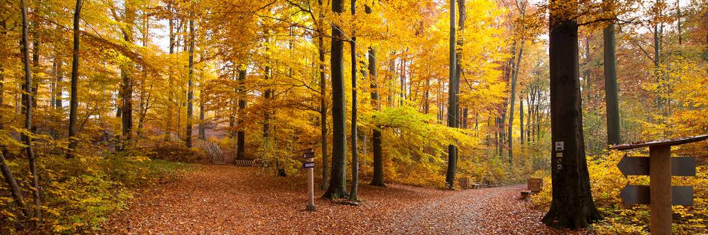 """<span class=""""big"""">Aktywny wypoczynek</span> - zrewitalizowane ścieżki w lesie bukowym"""