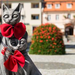 Galeria trzebnickie koty